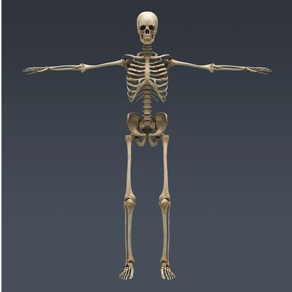 человек скелетов картинки близнецы знак для